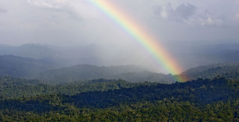 A rainbow arches over an area of rainforest in Papua, Indonesia &copy Greenpeace/Rante