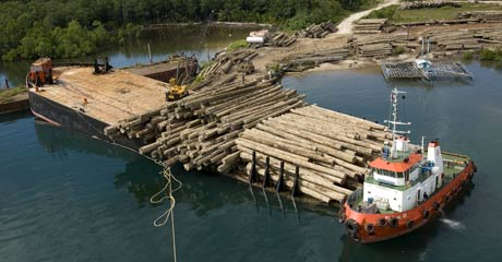 Merbau logs are loaded onto barge in Kaimana, West Papua, despite the company's permit being suspended © Greenpeace/Rante