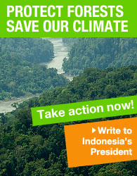Protect forests to save our climate - write to Indonesia's president