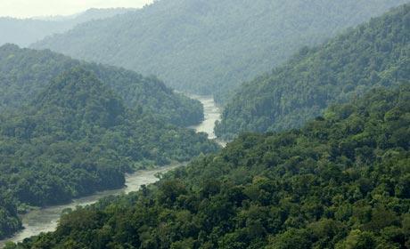 Sungai yang membentang di hutan Mamberamo Papua, Indonesia © Greenpeace/Rante