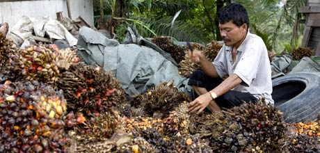 With a scheme like Forests For Climate, intact forests would become more valuable than cash crops like palm oil © Beltra/Greenpeace