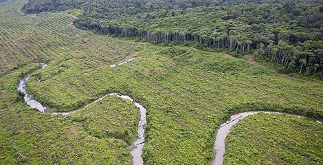 A river winds its way through a deforested area in the Lereh region of Papua, Indonesia © Greenpeace/Rante