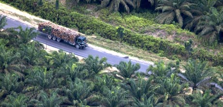 A lorry travels through a palm oil plantation in Sumatra &copy Beltra/Greenpeace
