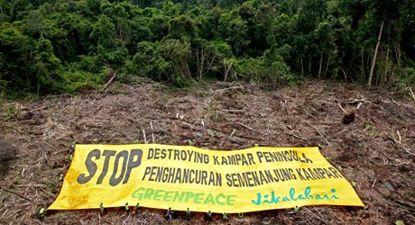 holding out the banner in the Kampar peninsula © Greenpeace/Novis