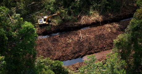 A bulldozer moves alongside canals used to drain peatland by palm oil company Duta Palma