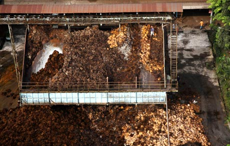 Oil palm fruit being processed © Greenpeace/Novis