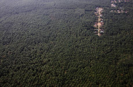 A small town for workers in the heart of a Wilmar palm oil plantation © Greenpeace/Novis