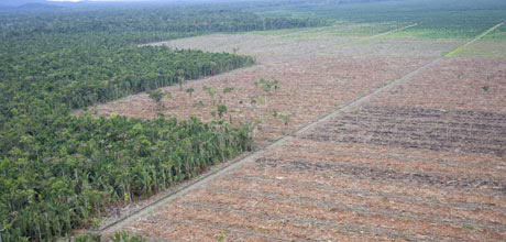 The handiwork of Sinar Mas, an RSPO member © Greenpeace/Rante